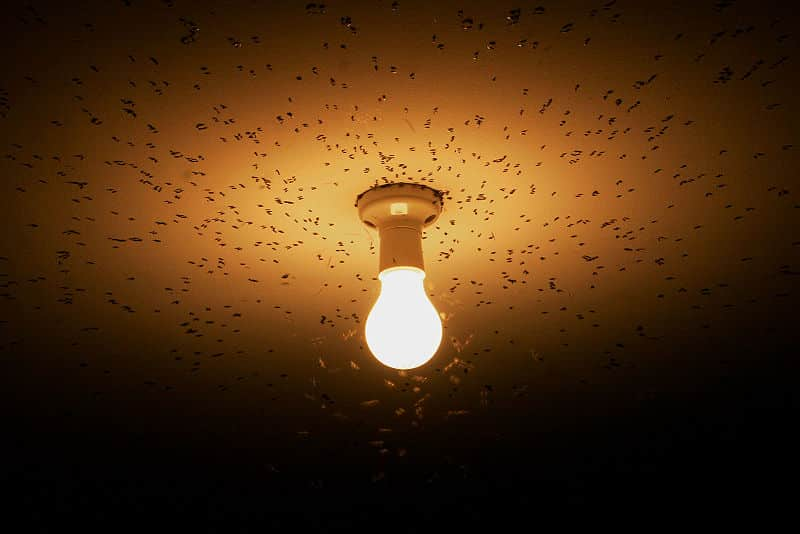 polilla hacia la luz tactismo