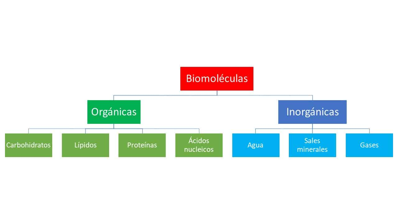 clasificacion de las biomoleculas organicas e inorganicas